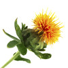 safflower_small